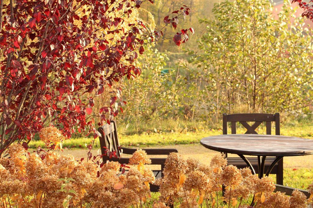 BEI SCHUMANN Herbst